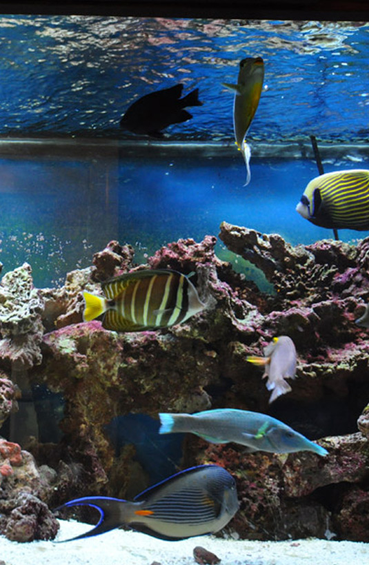 Office Image | Fish Tank